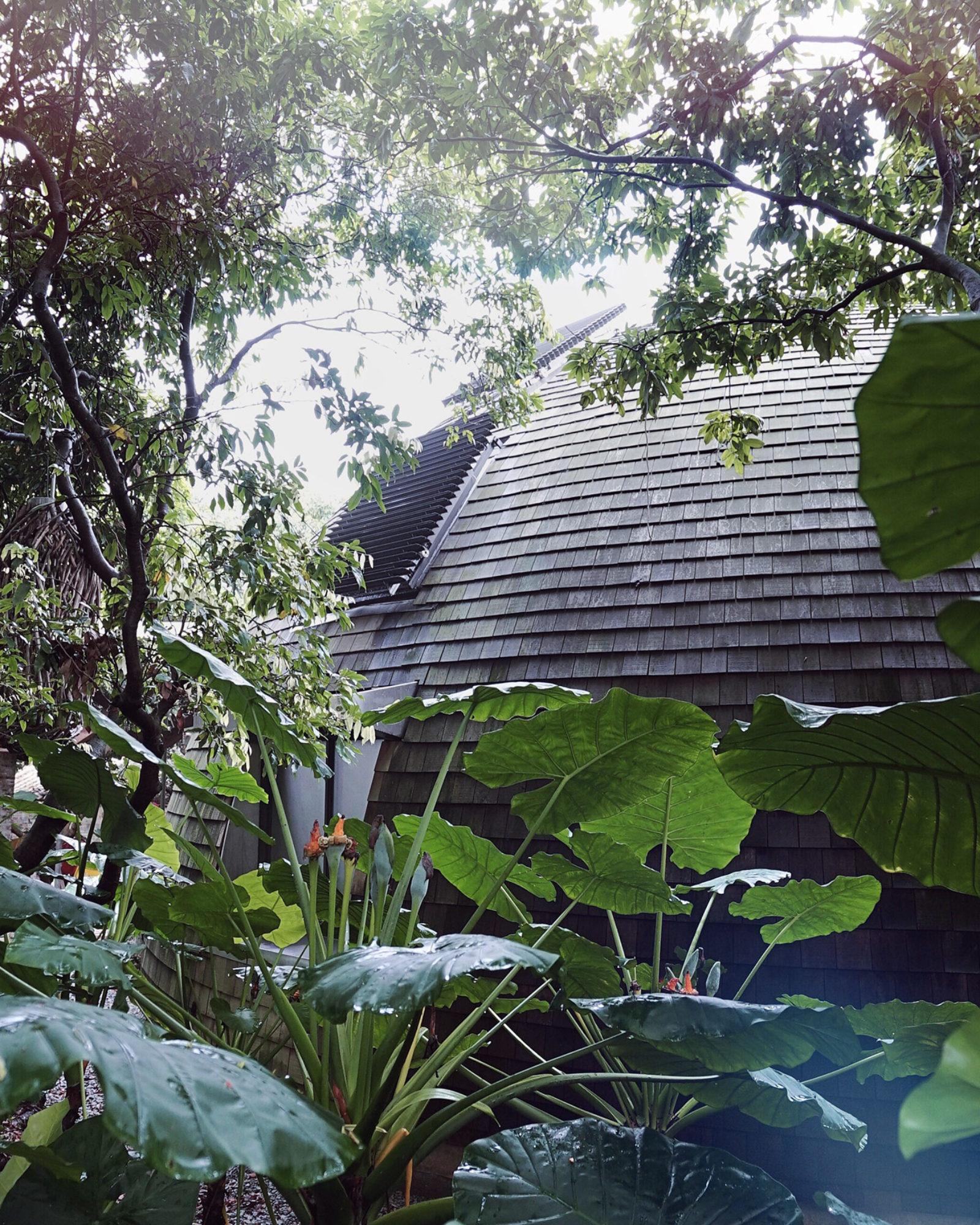 BLEU-NATURE-halo-dome-jungle-chine